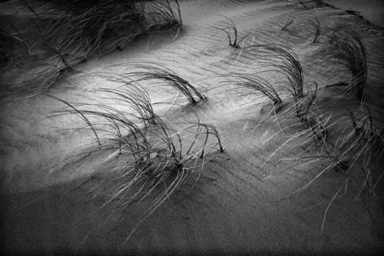 Blowing sea grass