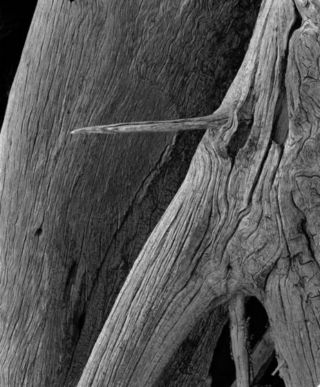 Stump detail