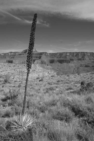 Us landscape 2
