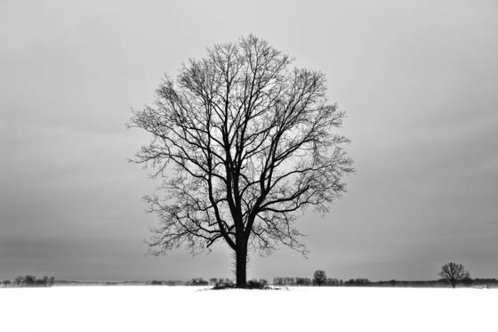 Trees in winter white