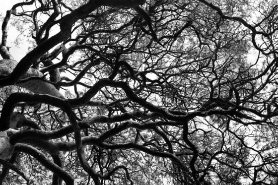 Trees of life  1
