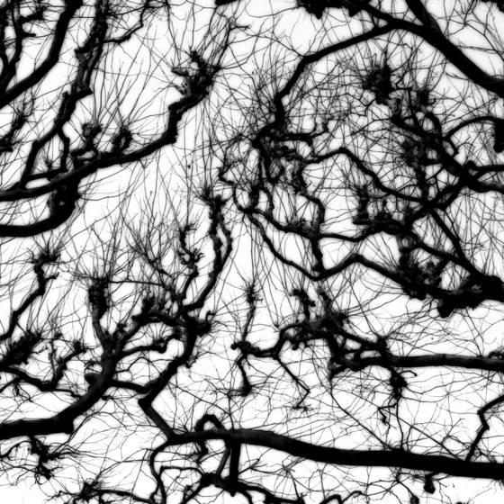 Tree 03