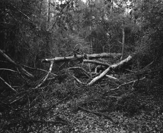 Rotting trees