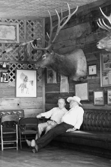 Old bulls
