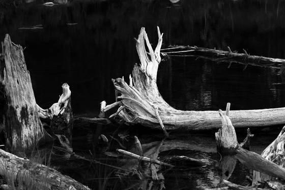Abul pond