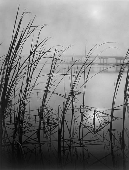 Reeds   fog