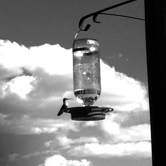 1 hummingbird