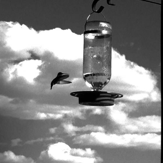2 hummingbird