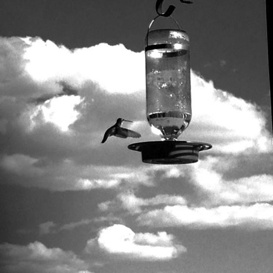 3 hummingbird