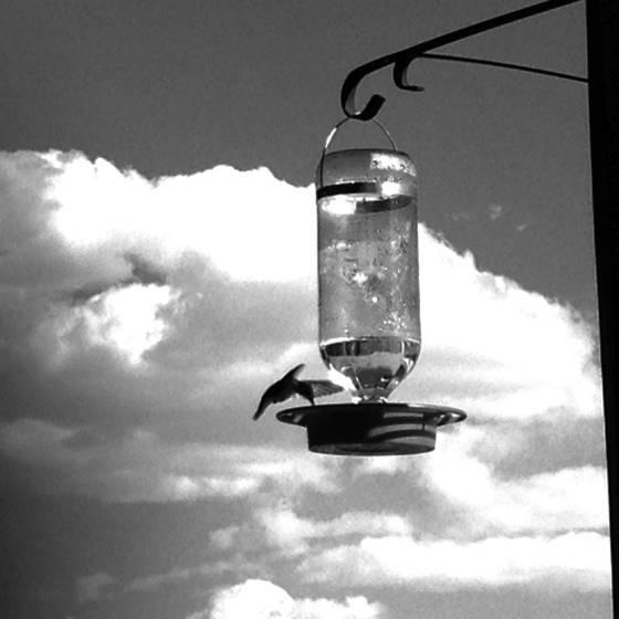 4 hummingbird