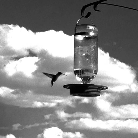 5 hummingbird