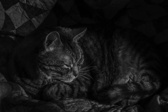 Jack napping