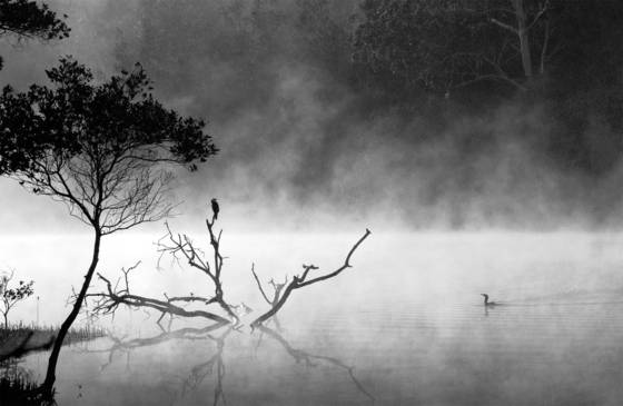 Cormorant mist
