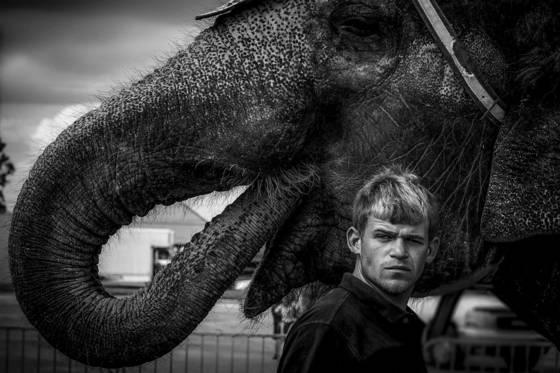 Elephant handler