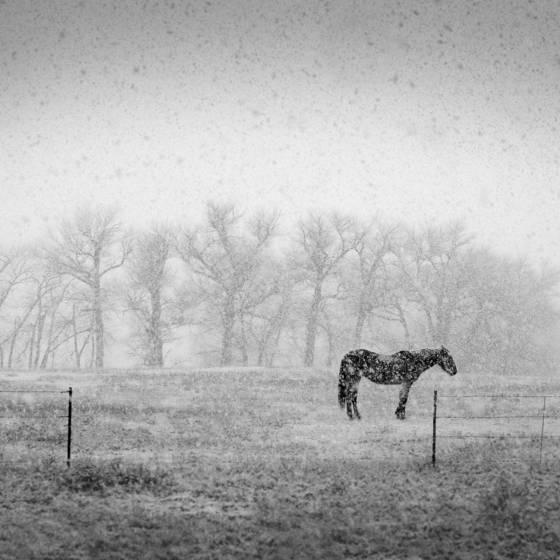Horse and  snowfall