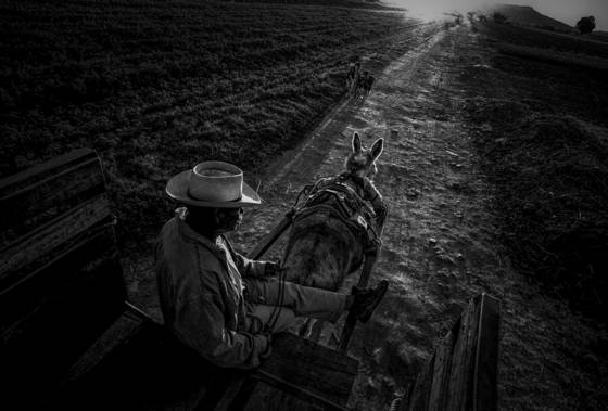 Cart at sunrise