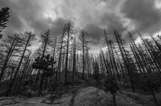 After the fire at valles caldera