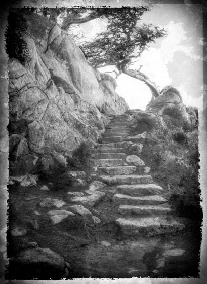 Stairs point lobos