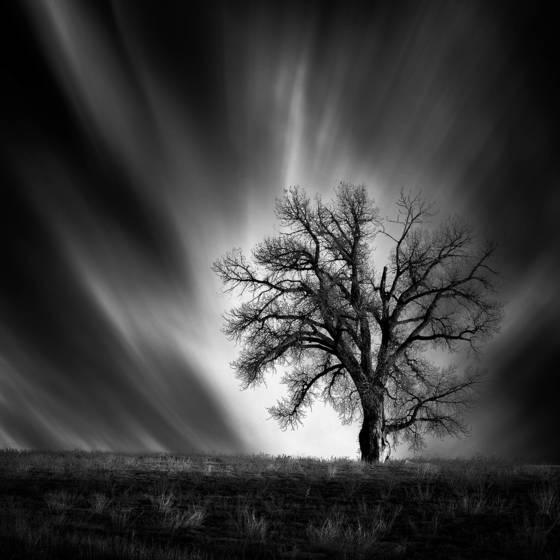 Berthoud tree