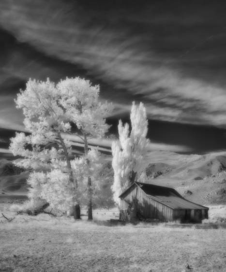 Ghosts of the sagebrush 6