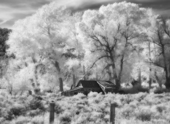 Ghosts of the sagebrush 9