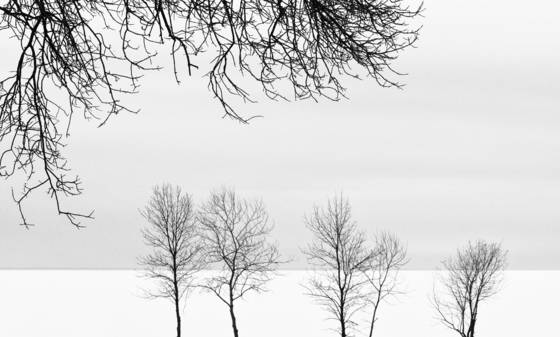 Beachside park trees and lake winnipeg