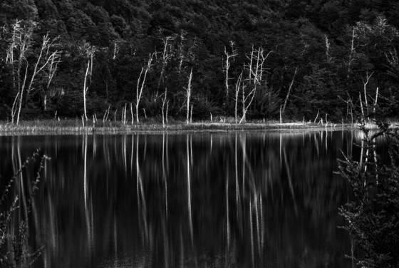 Bosque lacustre