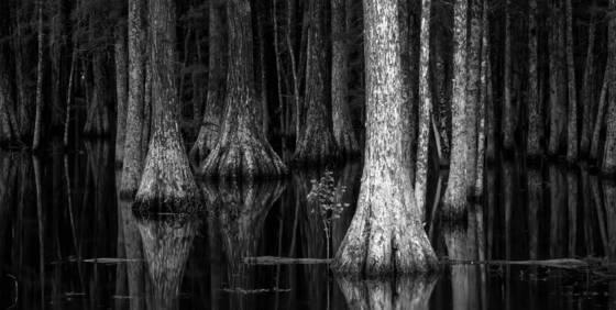 Cypress creek 2