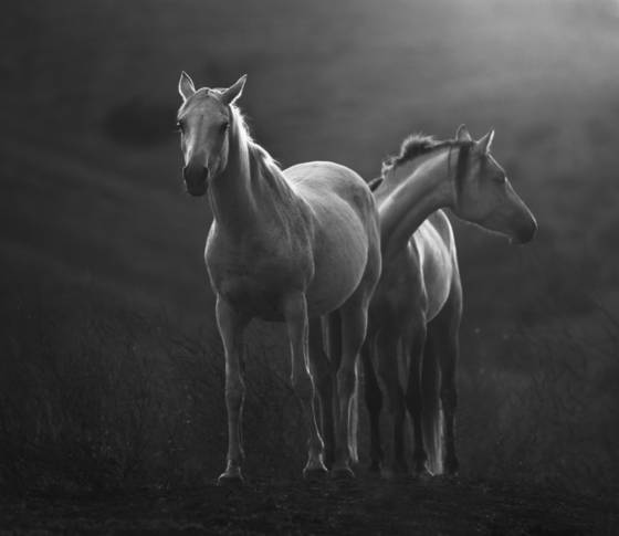 Two mares