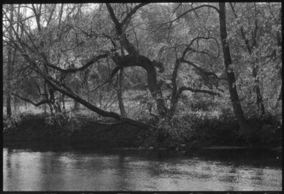 Trees along riverbank
