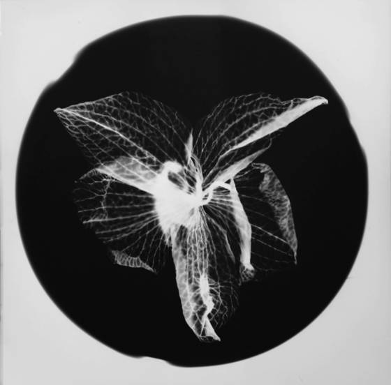 Untitled photogram