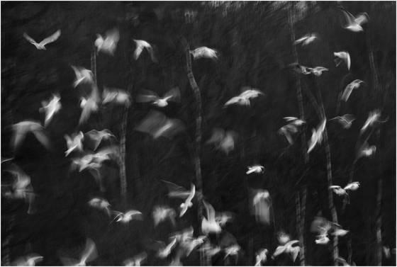 Gulls blur