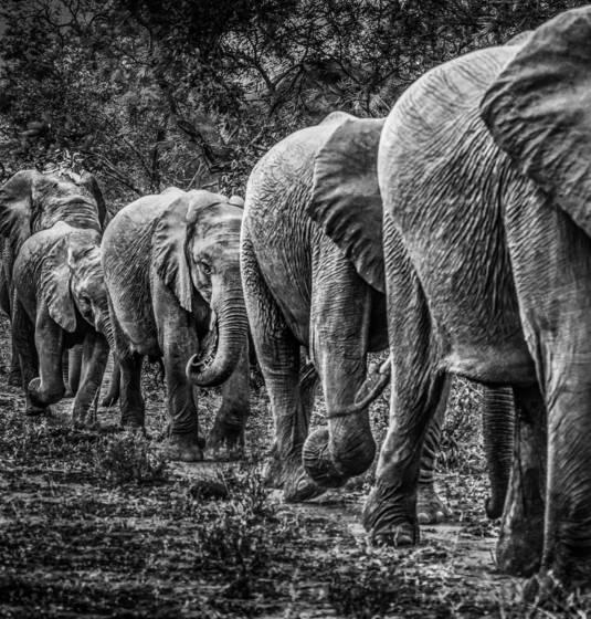 3  elephant train