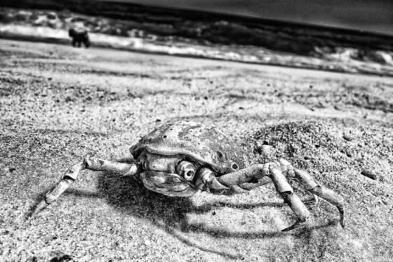 Beach crab sci fi