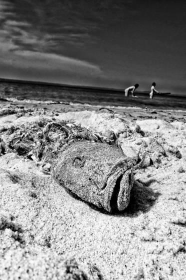 Dead bay fish