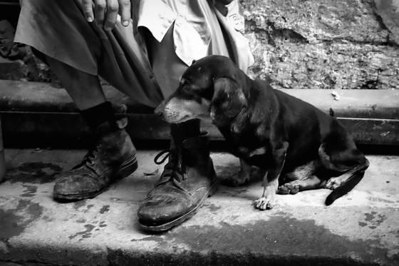 Dogs of havana 10