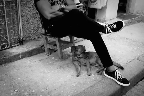 Dogs of havana 11