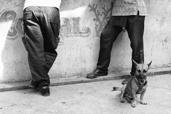 Dogs of havana 13