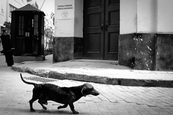 Dogs of havana 16