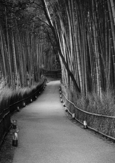 Bamboo path at dawn