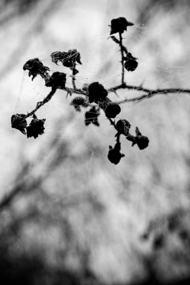 Fall s elegy   winter s blanket