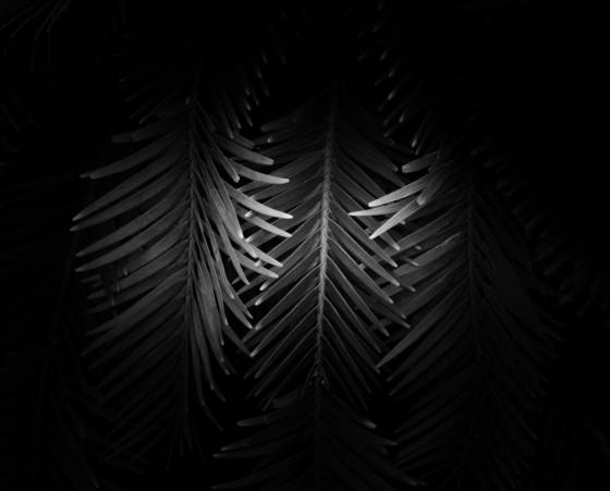 Botanical light 11