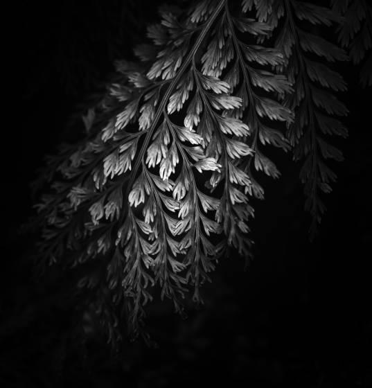 Botanical light 2