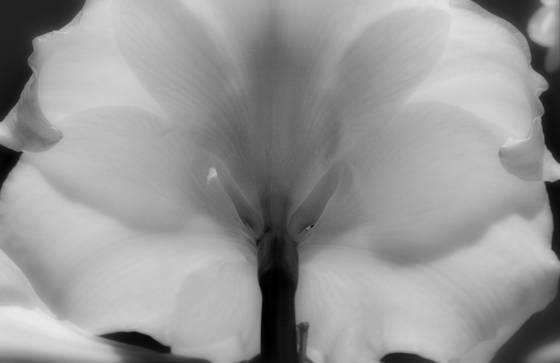 Long nose