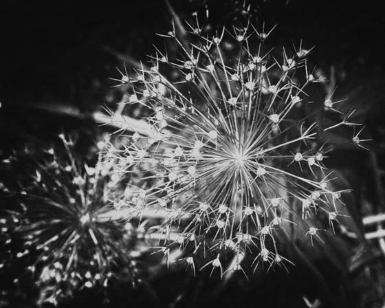 Fireworks pretensions