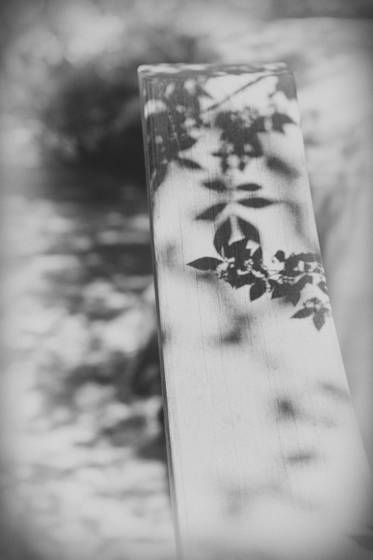 Leaf calligraphy