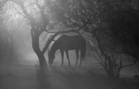 Surreal horse in the early light