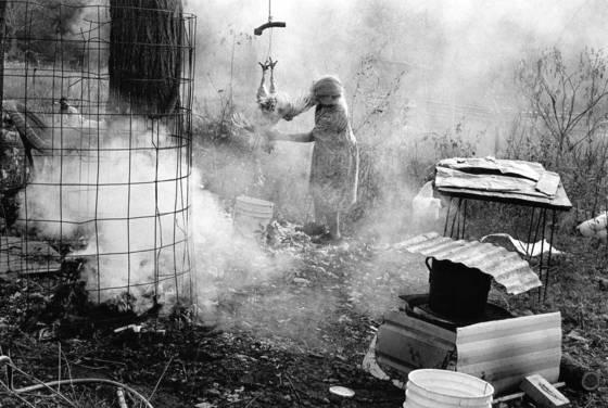 Woman plucking a chicken
