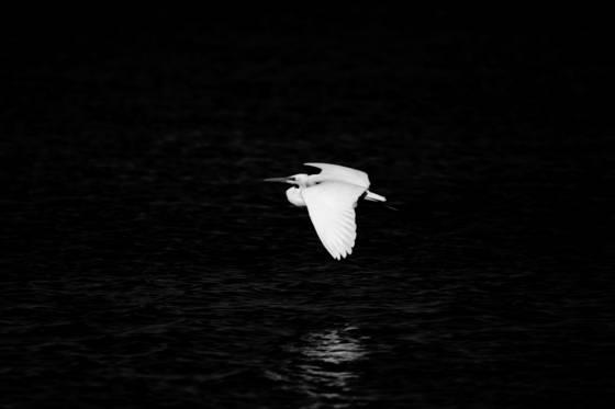 Bird 6
