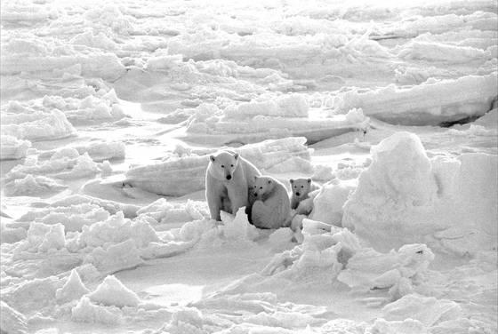 Bear alert